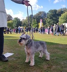 Chiswick  dog show 2018