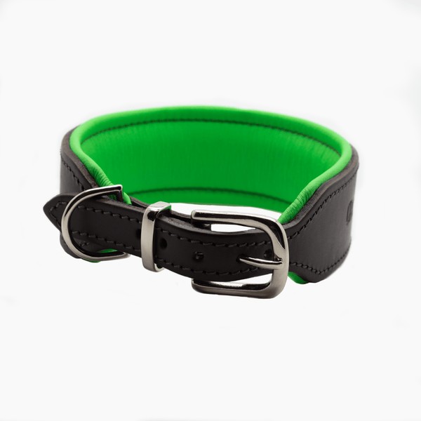 D&H Big Dog Padded leather dog Collar with Handle