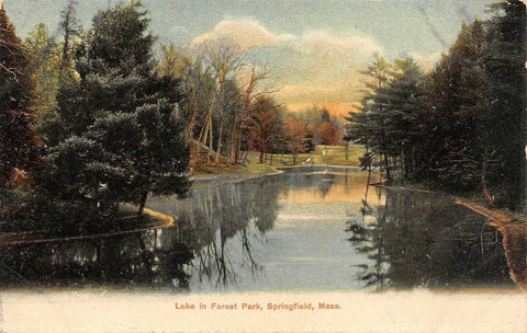 Refried Jeans Postcards   Springfield Massachusetts~Forest Park Lake~Evergreen Trees Reflect in Water~1905  front