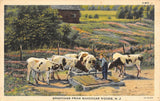 Rancocas Woods New Jersey~Farmer With Cattle at Water Pump~1944 Linen Postcard | Refried Jeans Postcards