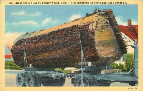 WA~Giant Spruce Log: 9' Diameter by 20' Long~1938 Postcard | Refried Jeans Postcards