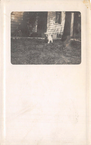 Wheaton Minnesota~Mr FO Hirsch Sends Pic~Little White Poodle by Stoop~1911 RPPC | Refried Jeans Postcards