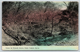 State Center Iowa~Creek in French Grove~Wooded Banks~c1910 Postcard