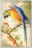 Catherine Klein~Green Blue Winged Parrot on Berry Branch~Edition Stehli~No 120