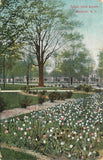 Rochester New York~Jones Square~Pink Purple White Tulips~Houses Behind~1908 | Refried Jeans Postcards