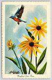 Maryland State Flower~Bluebird Over Black-Eyed Susan~Artist Ken Haag 1966