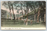 Mankato Minnesota~Deer in Sibley Park~Deer Rubs on Tree~c1910 Postcard