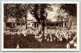 Oregon Chicken Ranch~Hundreds of Chickens Running Around, Heads Attached 1920s