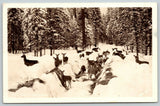 North Idaho~Deer in Snow Trenches~Snow-Flocked Pine Trees~Ross Hall 1940s RPPC