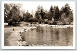 Tacoma Washington~Point Defiance Park~Ducks on Pond~Strut on Bank~1940s RPPC