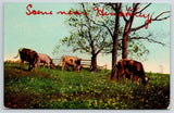 Hinckley Minnesota~Cattle Find A Place To Graze~Cows Wagging Tails & Lowing 1910