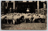 Chicago Illinois~Union Stock Yards~Sheep Pens~Worker in Boater Hat~1908 Postcard
