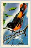 Maryland State Bird~Baltimore Oriole on Branch~Artist Signed Ken Haag~1966