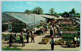 Westland Michigan~Clyde Smith & Sons Farm Market~Greenhouse~1970s Postcard