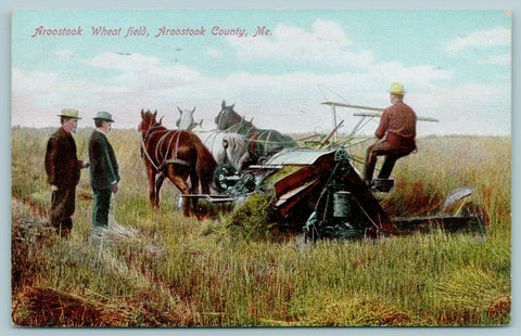 Aroostook County Maine~Farmer Threshing Wheat~Three Horse Combine~1909 Postcard