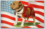 San Diego CA~Marine Corps Mascot~Sgt James Jolly Plum Duff~English Bulldog~1940s | Refried Jeans Postcards