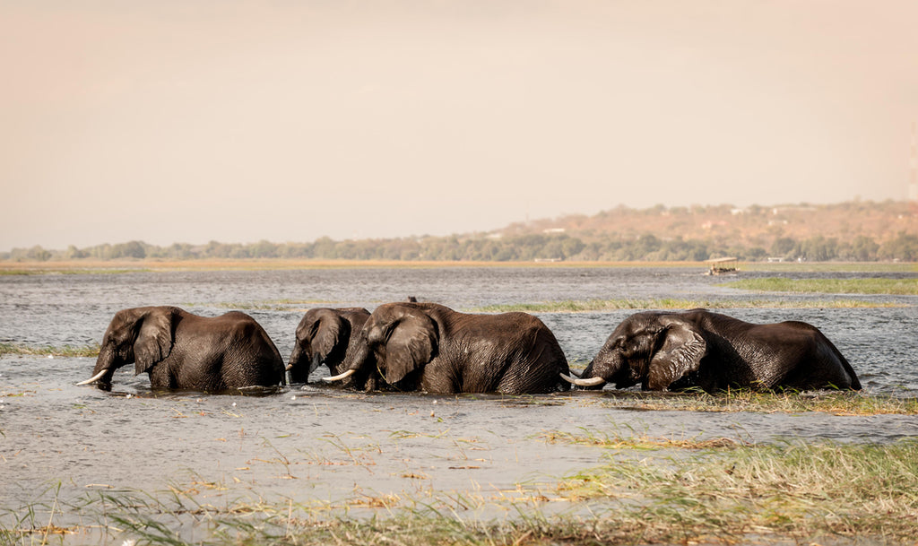 Field Notes: The Okavango Delta