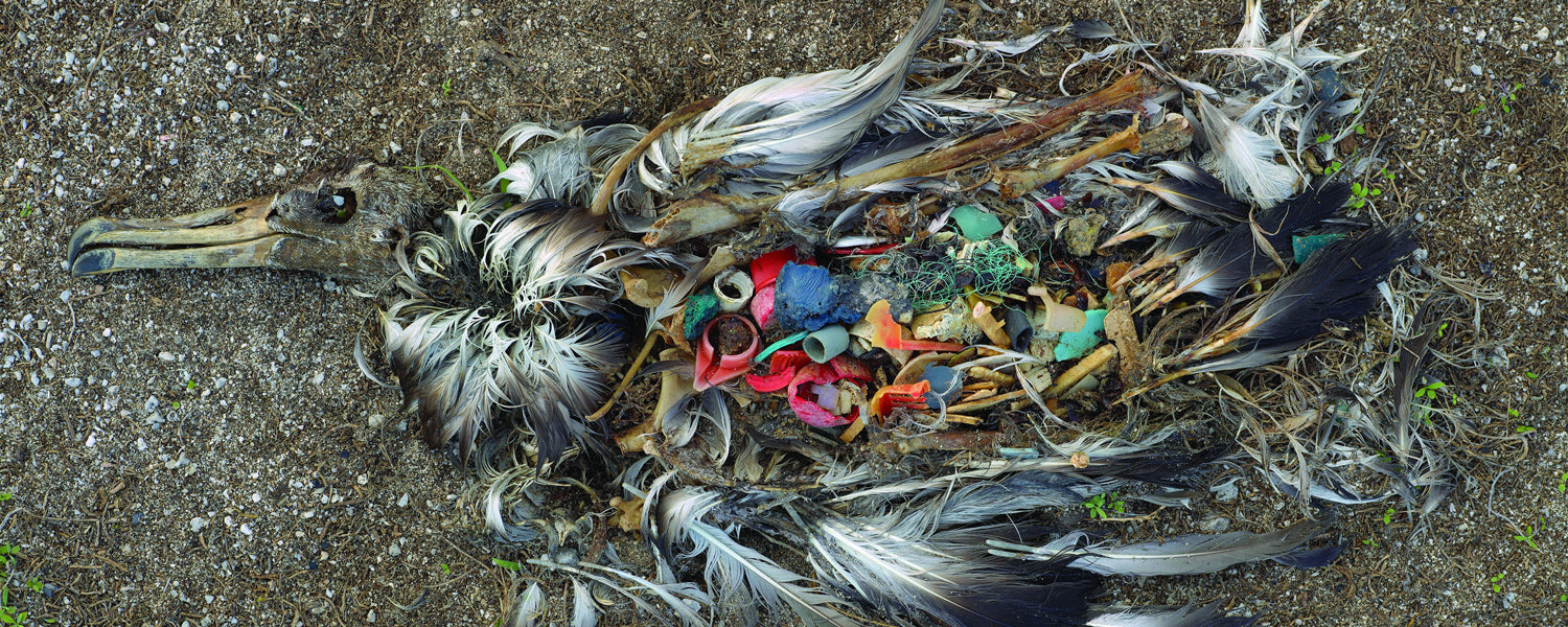 Bird killed by ingested plastic - Chris Jordan