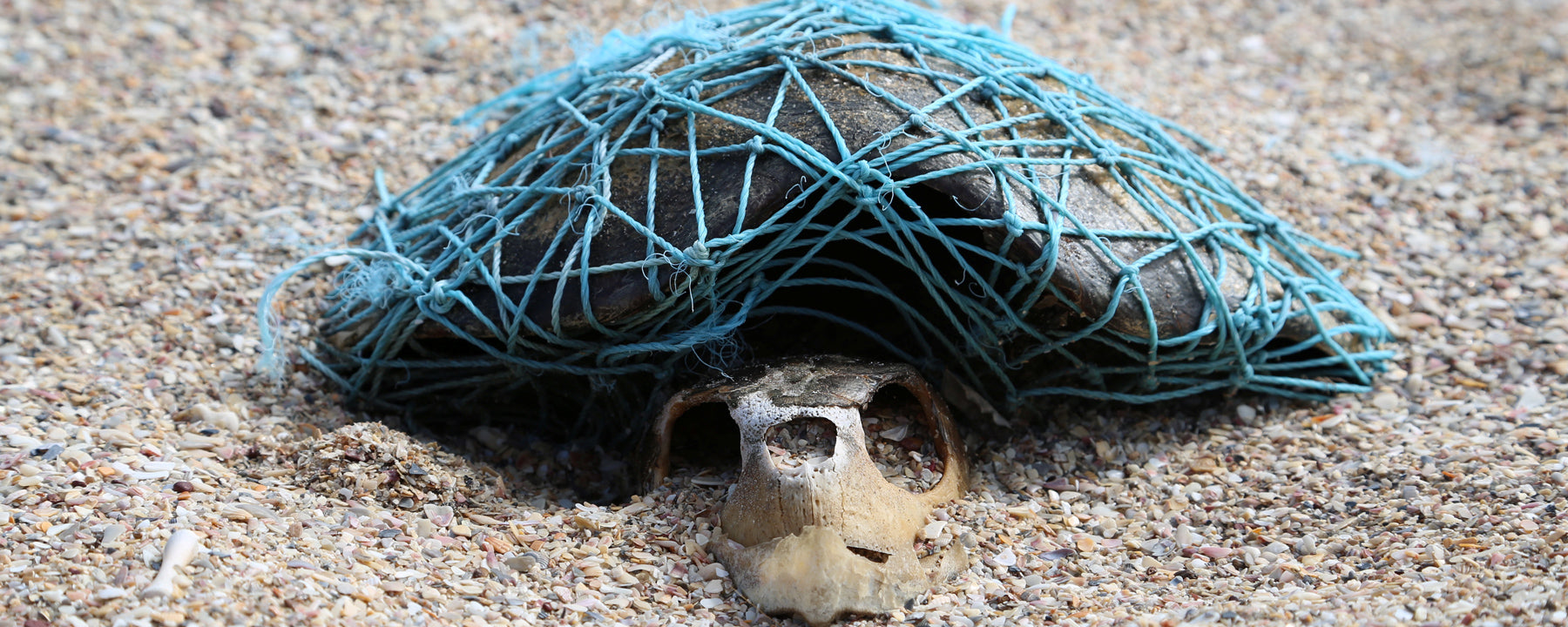 Turtle killed by ghost net - Paul Walters/SWNS