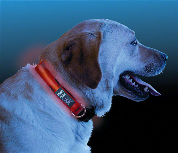 Nite Ize - Nite Ize LED Dawg Collar: Red (Medium) - KakiOutdoor.com