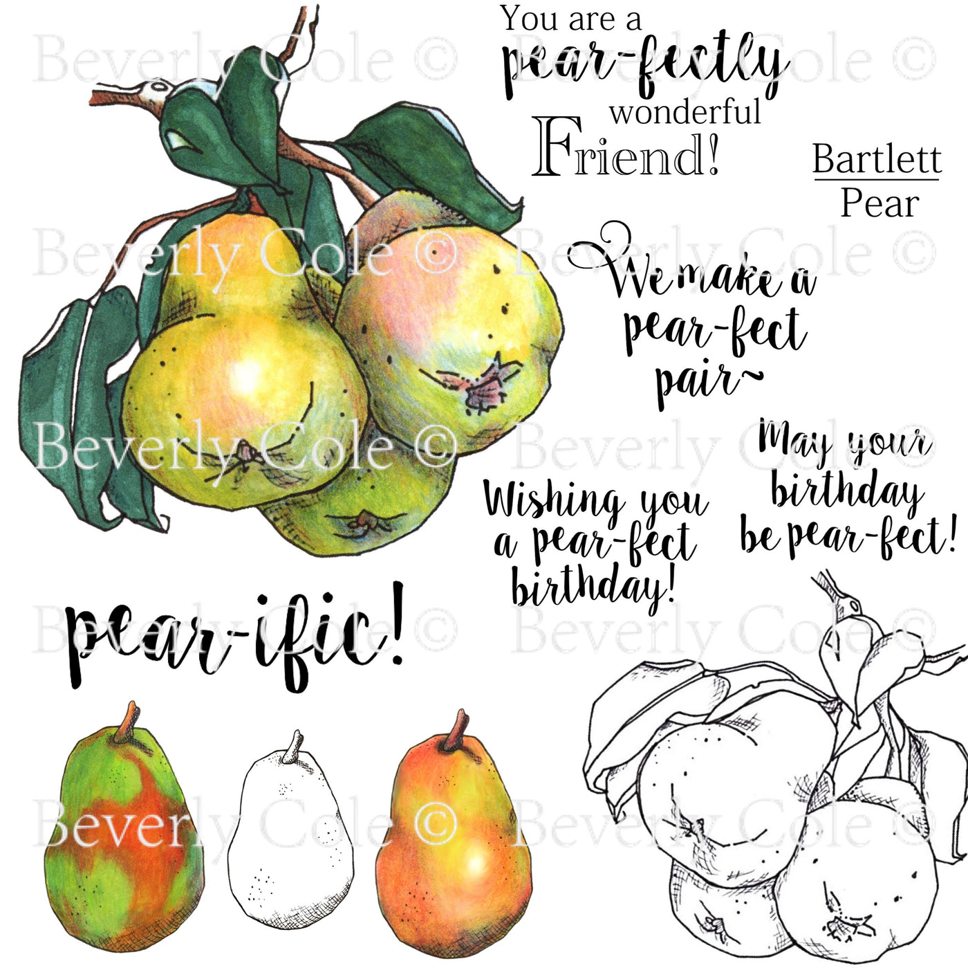 Sketched Pear Digital Stamp Set [Digi905BC]