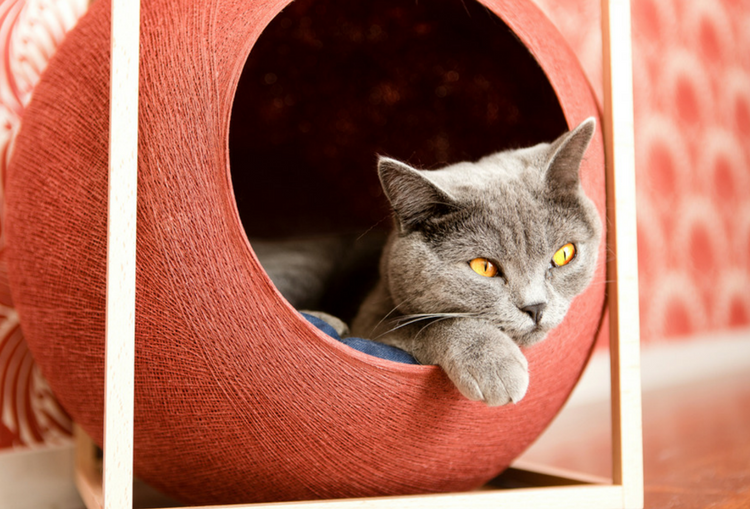 Meyou Paris - The Purrfect Cat Bed for Stylish Homes