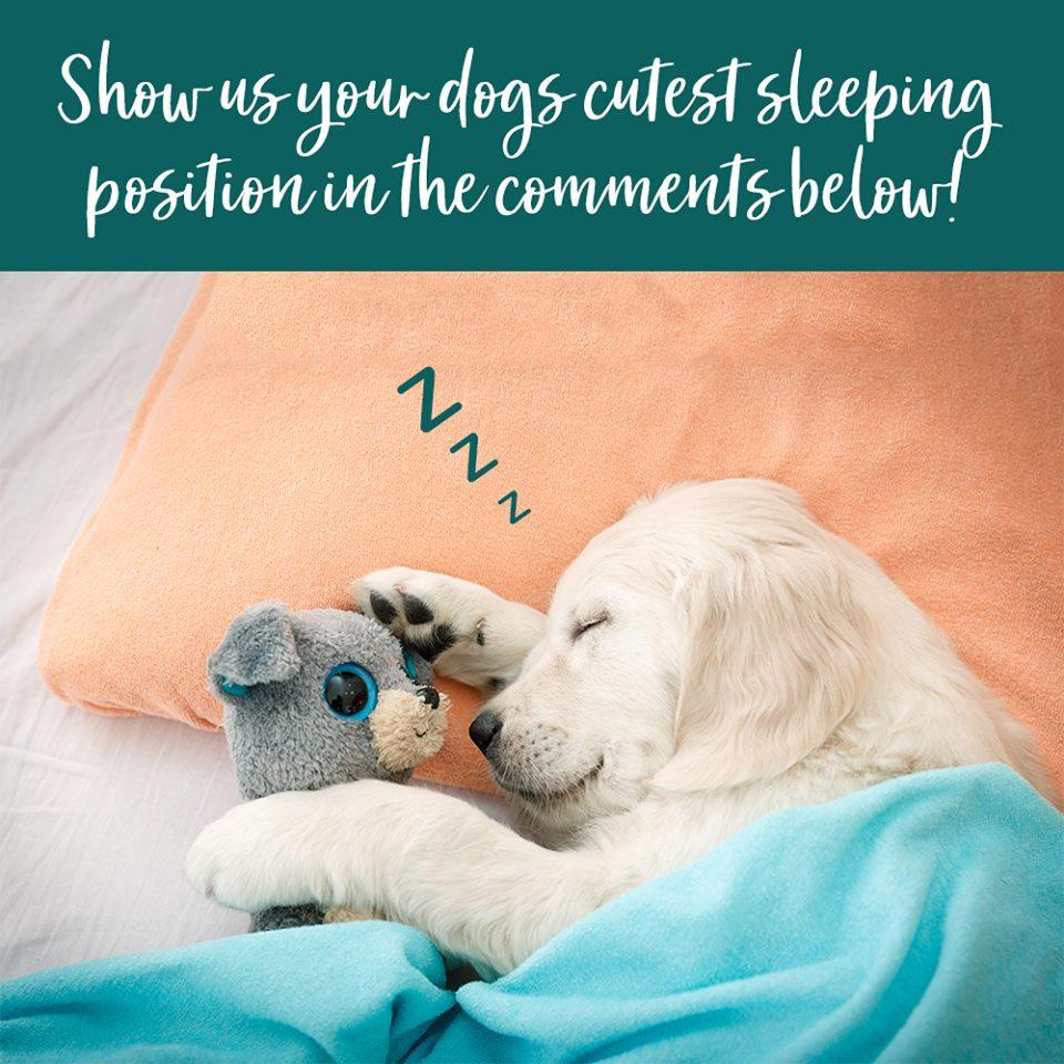 What's your dog's favourite sleeping position?