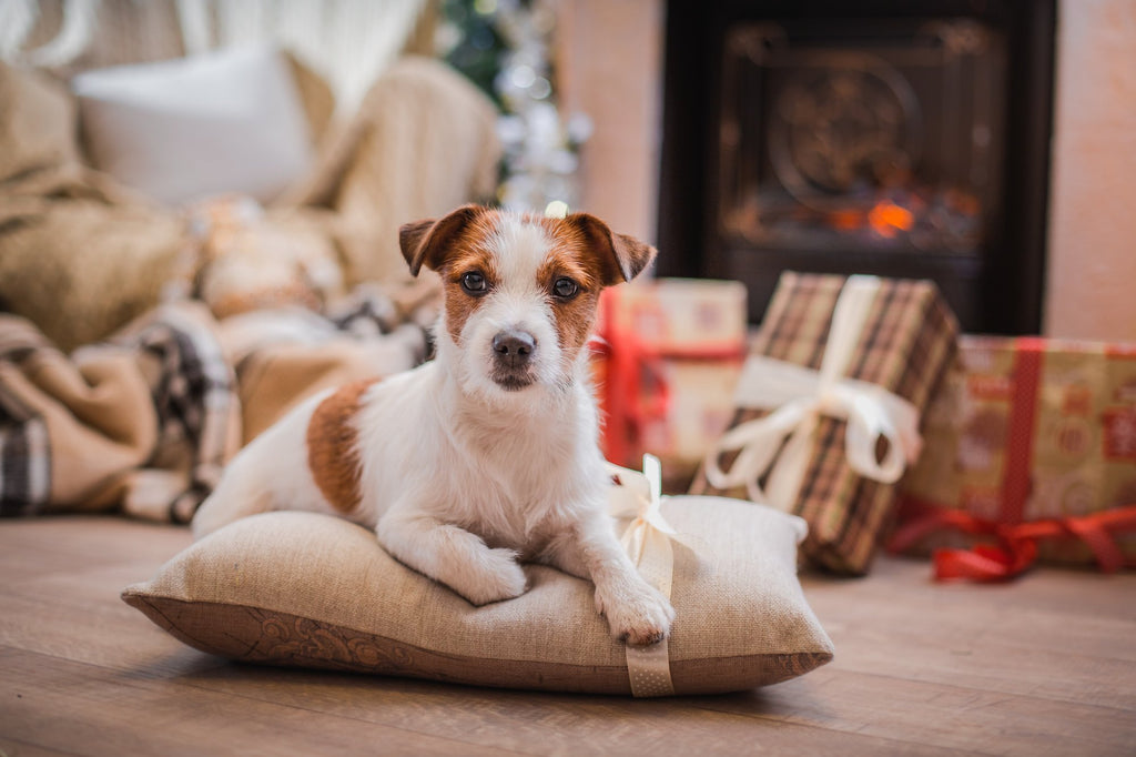 REVEALED: The UK's Most Pampered Pooches This Christmas
