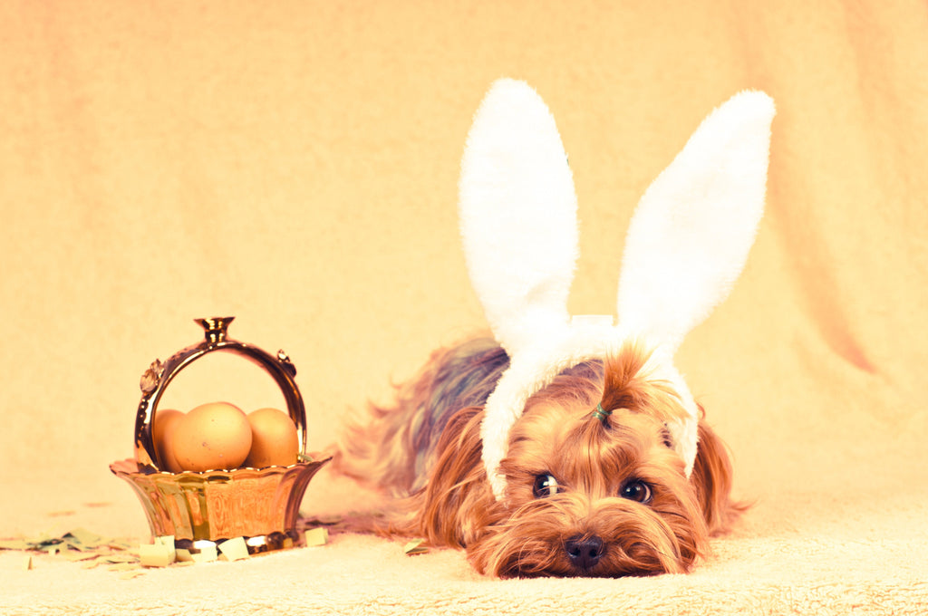 Easter egg hunts are not just for humans!
