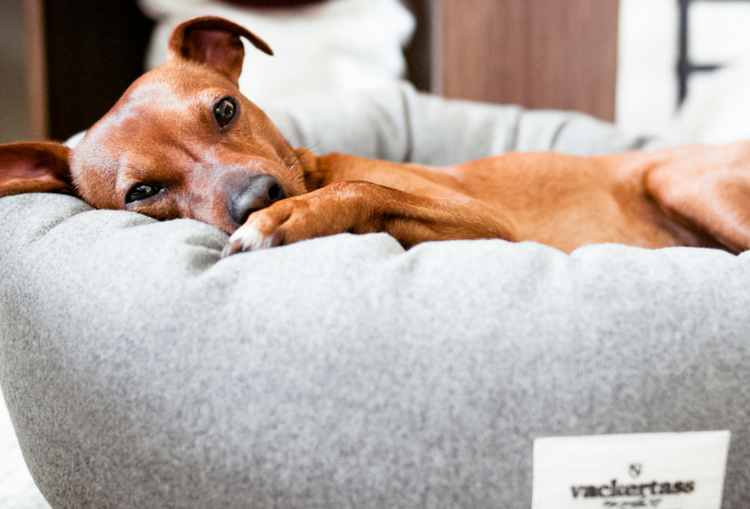 What Type of Pet Bed is Best for Your Dog?