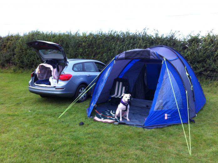 Handy hints for camping with dogs