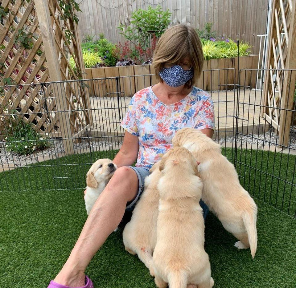 WATCH: adorable Guide Dogs puppies get used to face masks