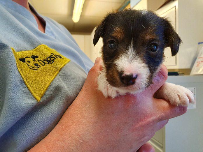 "A puppy called ""Lockdown""? Thousands vote in rescue puppy naming poll"