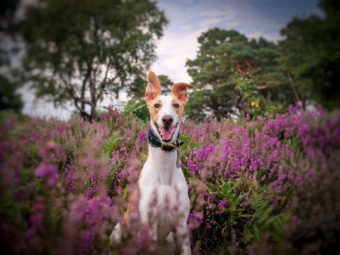 Surrey teenager wins RSPCA's instagram picture award
