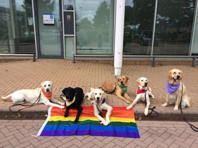 Pride Dogs for Guide Dogs: take part to the virtual dog show!