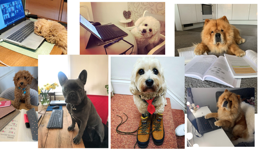 Pawfessionals: meet the pets working from home