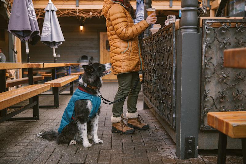 Top 9 Coats & Jackets for Your Dog To Stay Warm & Dry