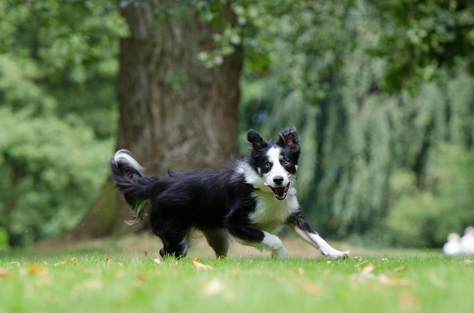 The Most Active Dogs in the UK