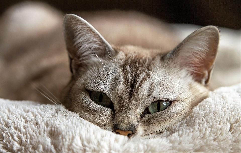Signs of Thiamine Deficiency in Cats