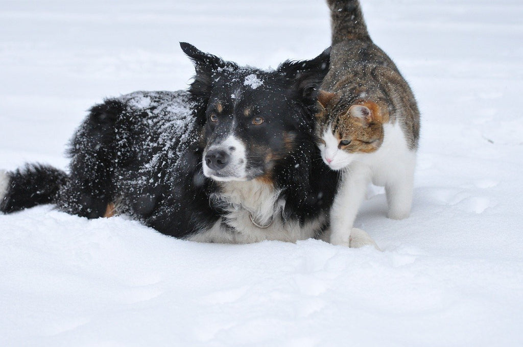 Vets issue 'cold weather' warning to pet owners as storm Ciara disruption continues