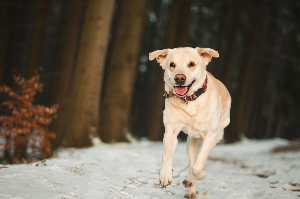 Keep Pets Safe this Winter