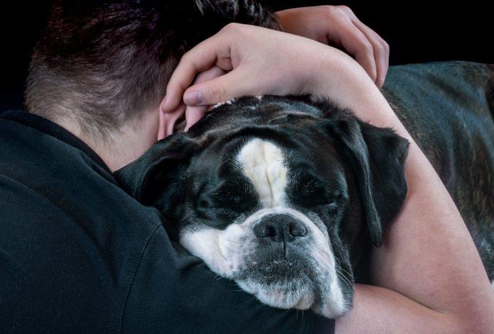 Mental Health Awareness Week: the importance of pets