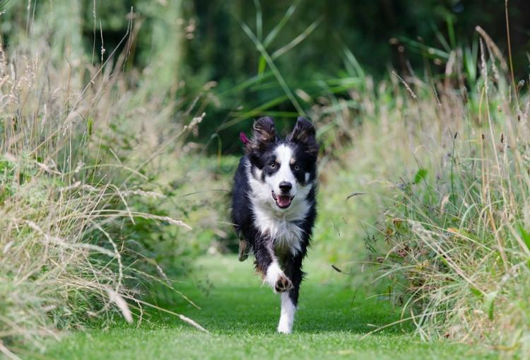 Events: Dog Friendly Events in the UK - July 2016