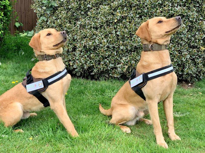 Detection dogs trained to find Japanese knotweed – the most invasive plant in UK