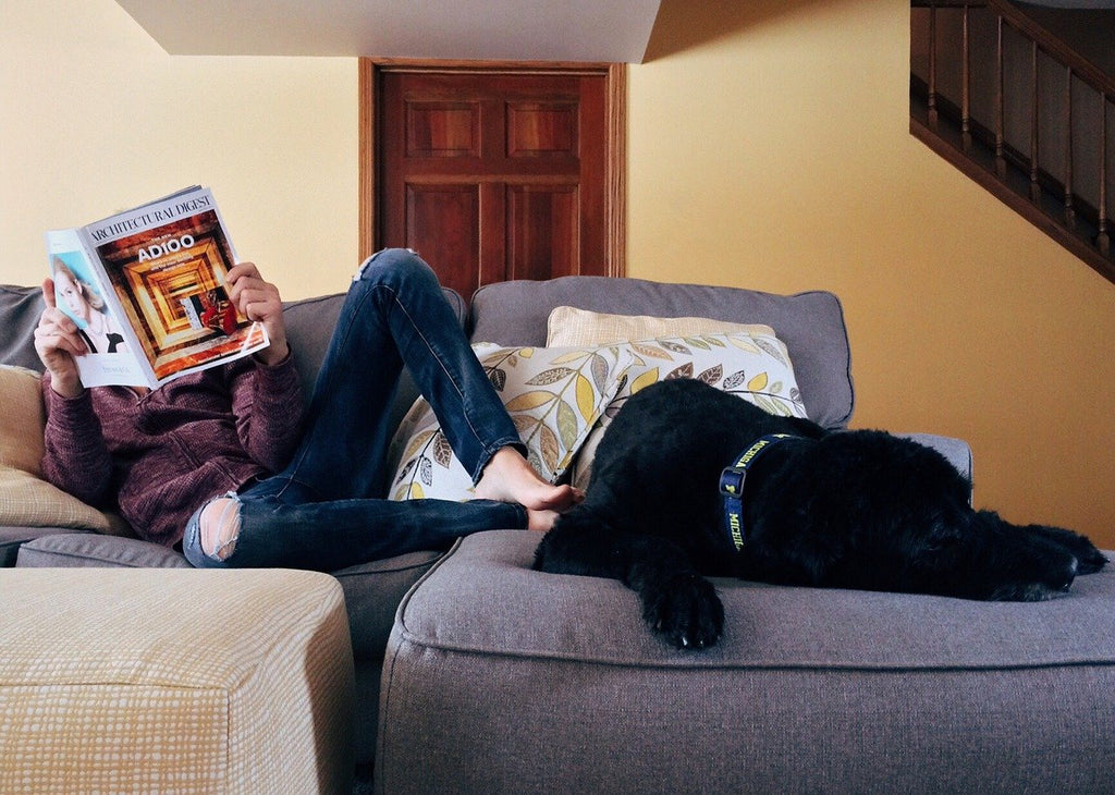 Is renting with pets getting easier?