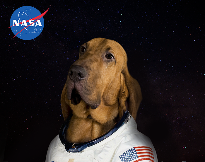 The first official pawtrait of Pluto, the first dog to go to Mars.