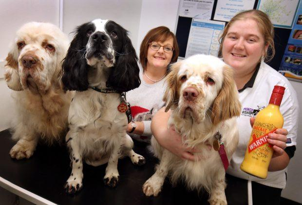 Tipsy Spaniels Prompt Sobering Warning