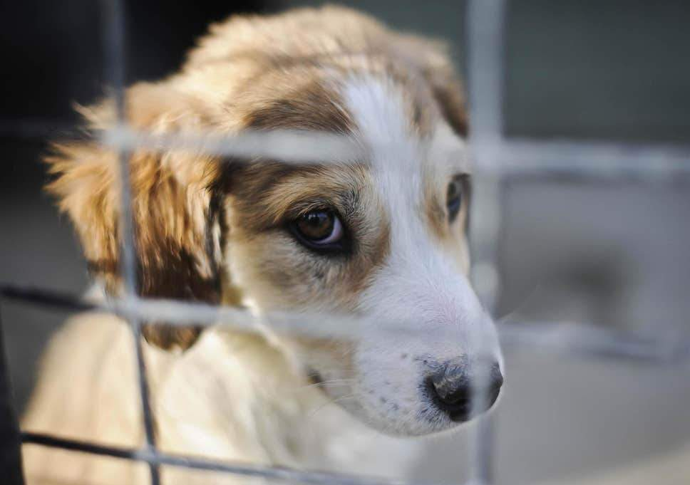 Petfished: Public Urged To 'Do Their Part' In Ending Cruel Puppy Farming