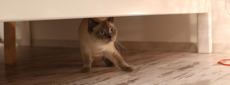 Fireworks Fear: How To Recognise Cat Anxiety And How To Help