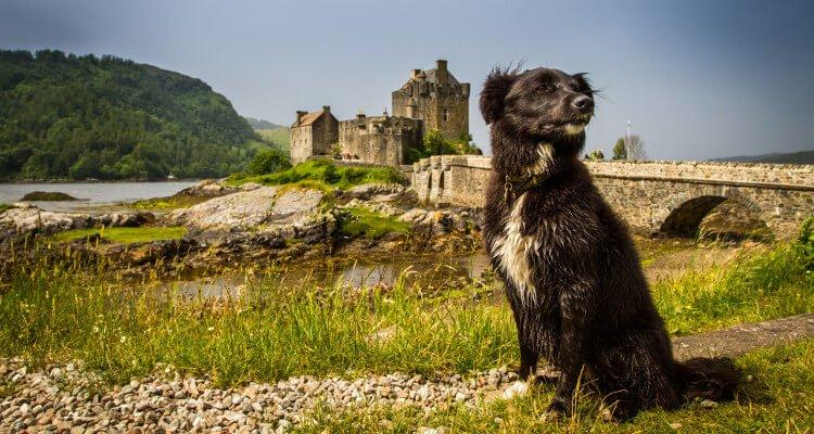 The five best Spring dog walks in the UK